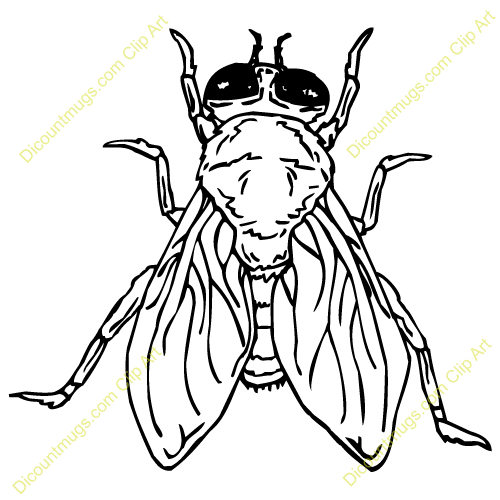 fruit fly clipart - photo #48