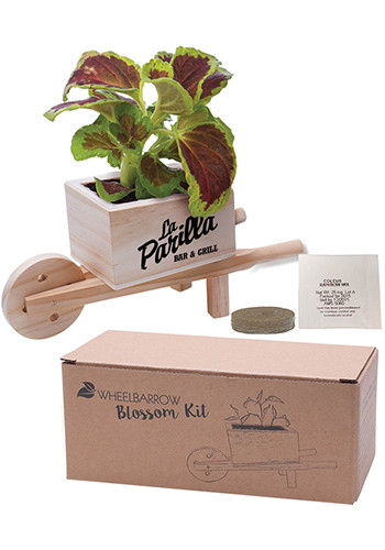 Promotional Forget Me Not Wooden Cube Blossom Kits