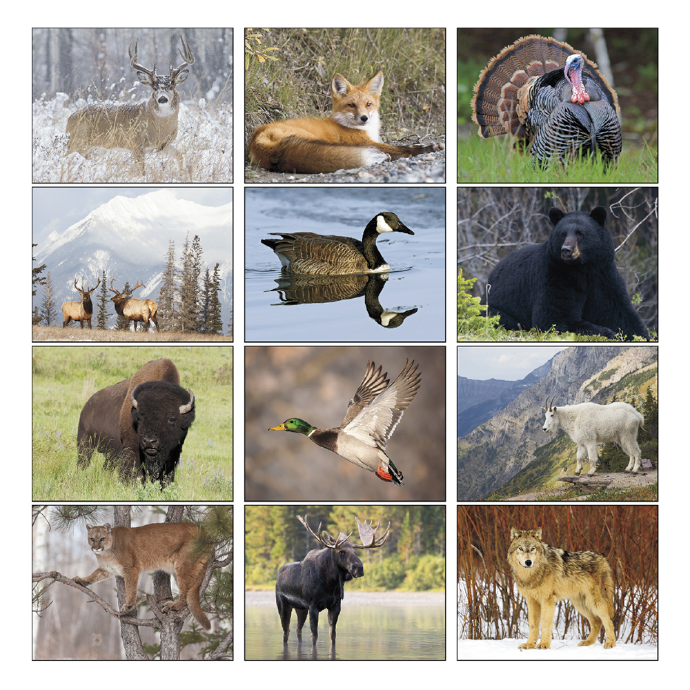 Custom North American Wildlife Triumph Calendars X11329